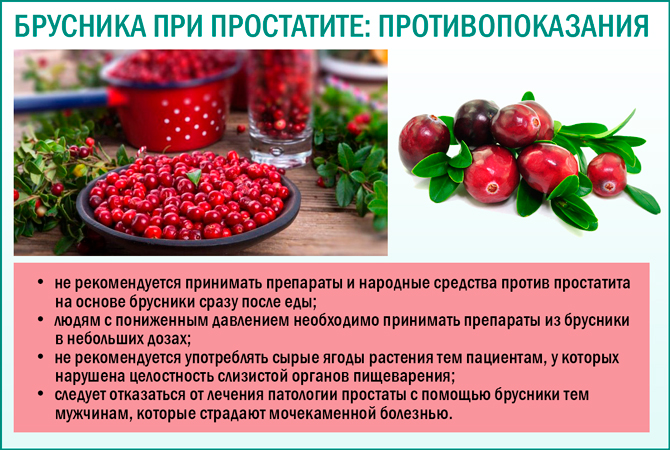 Лечебные свойства листьев брусники, применение и рецепты чая