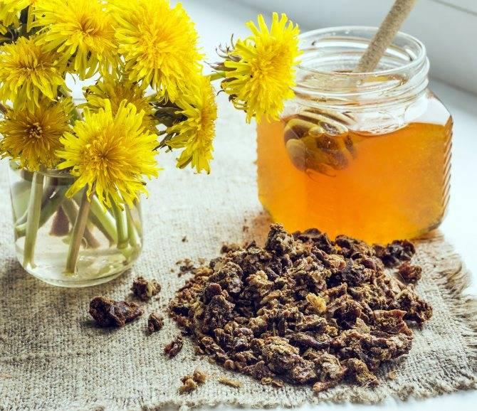 Как жевать прополис: применение в лечебных целях, польза и вред, при каких болезнях