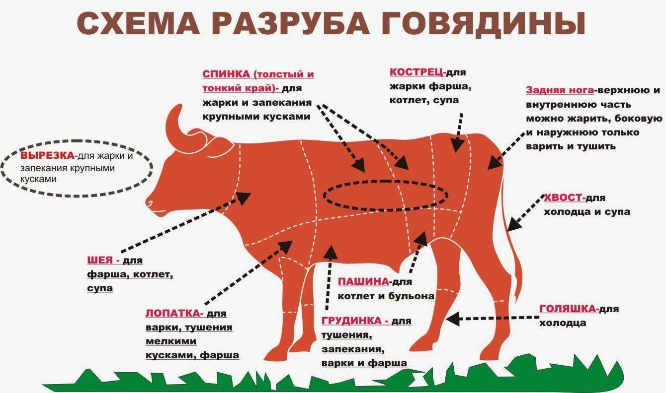Чем полезно и вредно красное мясо: обзор исследований