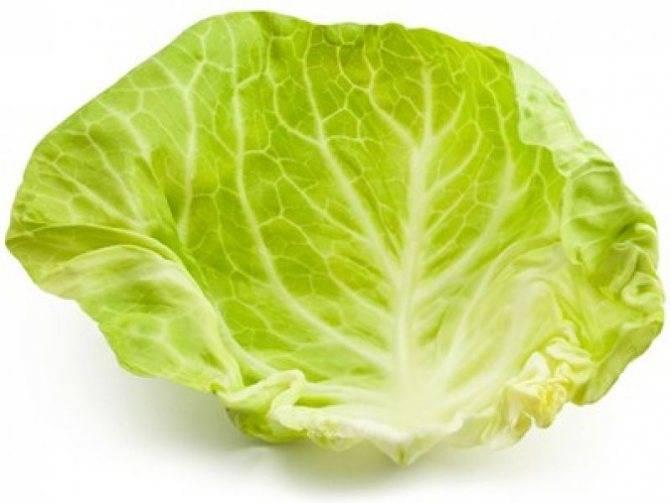 Белокочанная капуста и её листы для здоровья и красоты