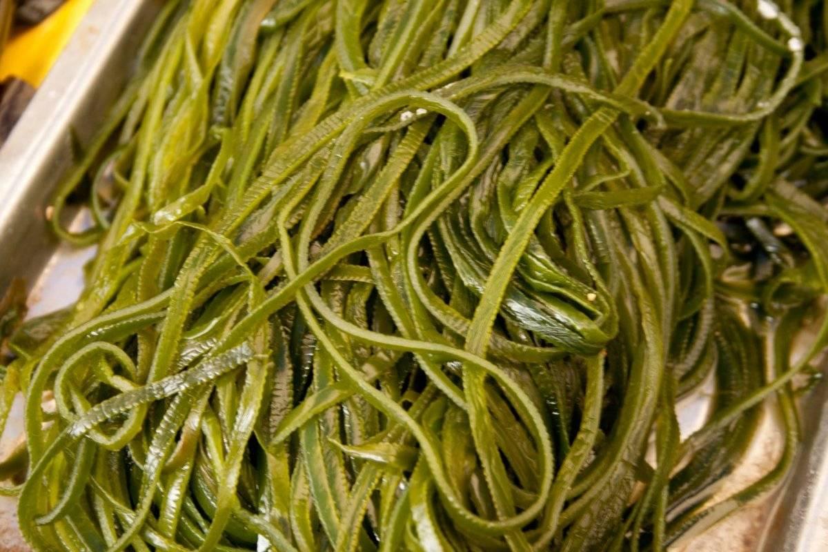 Морская капуста – польза и вред, лечебные свойства