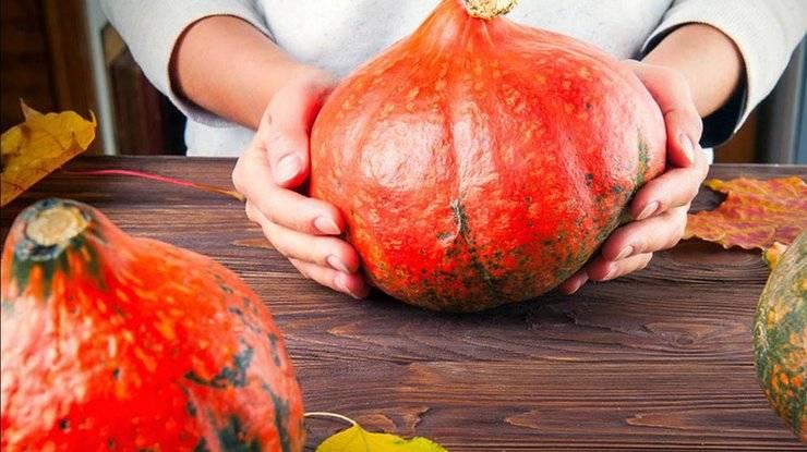 Чем полезна тыква для организма, лечебные свойства и противопоказания, отзывы