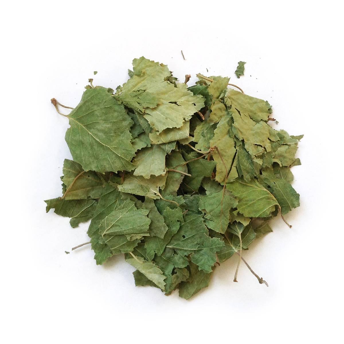 Листья березы — лечебные свойства и противопоказания