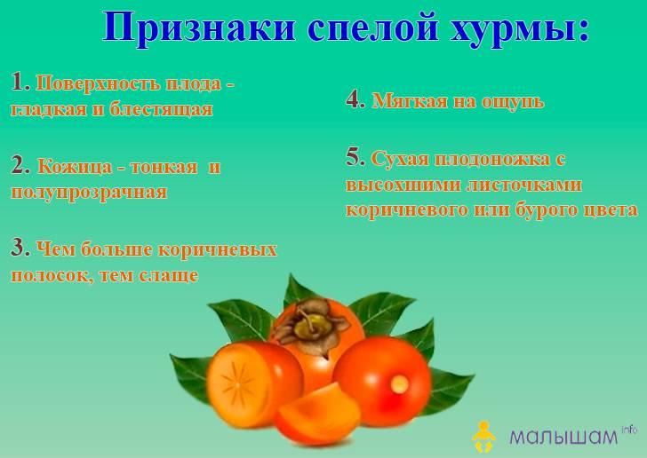 Хурма: полезные свойства и противопоказания, применение, рецепты
