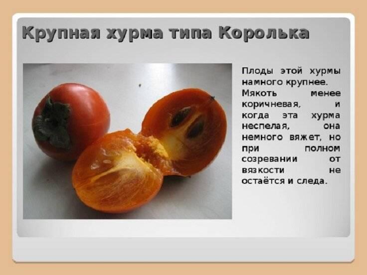 «пища богов» и южан: чем полезна хурма и кому ее лучше не есть?