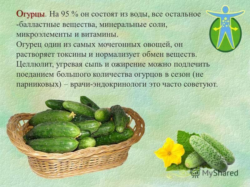 Огурцы польза и вред для здоровья — влияние на организм человека и полезные свойства для мужчин и женщин
