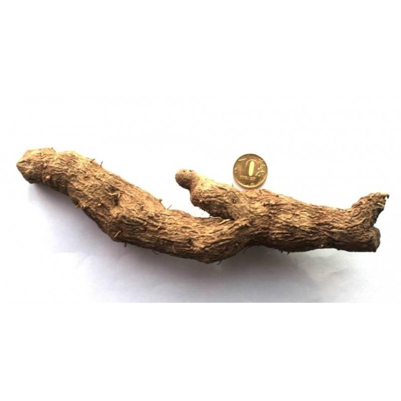Адамов корень: рецепты настоек, мазей, компрессов для лечения суставов
