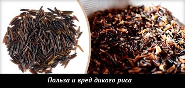 Дикий рис: польза и вред этого злака для похудения и рецепты салатов на основе черного риса