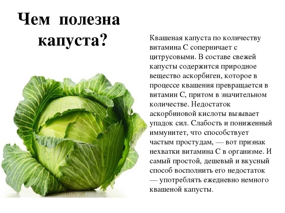 Капустный лист — лечебные свойства и применения. капустный лист: лечебные свойства и противопоказания как правильно приложить капустный лист