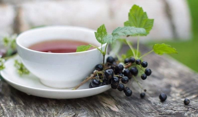 Чай из листьев смородины: польза и вред для здоровья